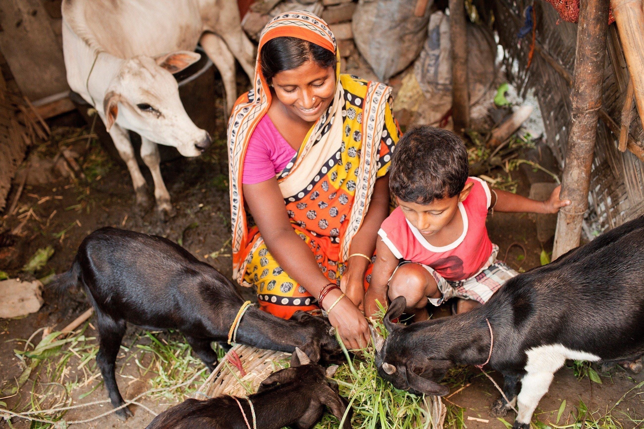 Eine Mutter füttert mit ihrem Sohn das Vieh.
